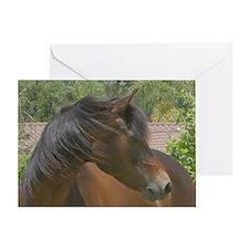 Greeting Card-head shot morgan mare
