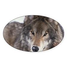 Wolf Gaze Oval Decal