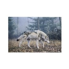 Grey Wolf - On the Prowl Rectangle Magnet