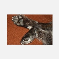 Cairn Terrier Paws Rectangle Magnet