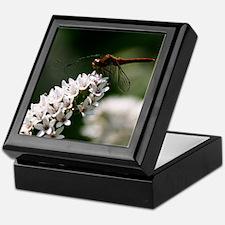 Dragonfly on Milkweed Keepsake Box