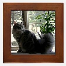 Maine Coon Cat Framed Tile