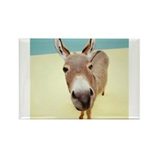 Donkey Rectangle Magnet