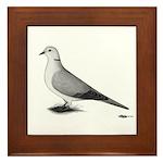 Ringneck Dove Standard Framed Tile