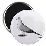 Ringneck Dove Standard Magnet