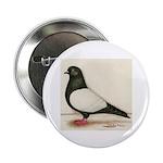 "Black Whiteside Roller Pigeon 2.25"" Button (1"