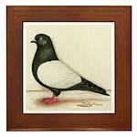 Black Whiteside Roller Pigeon Framed Tile