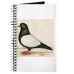Black Whiteside Roller Pigeon Journal