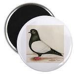 Black Whiteside Roller Pigeon Magnet