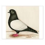 Black Whiteside Roller Pigeon Small Poster