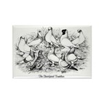 Shortface Tumbler Pigeons Rectangle Magnet