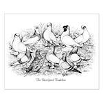Shortface Tumbler Pigeons Small Poster