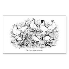 Shortface Tumbler Pigeons Rectangle Decal