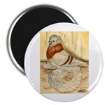 Mealy English Trumpeter Pigeo Magnet