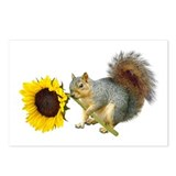Squirrel Postcards