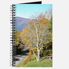 Autumn Drive Journal
