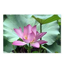 Lotus Postcards (Package of 8)