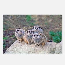 4 Meerkats Peering Postcards (Package of 8)