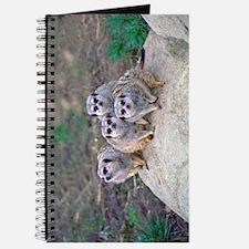 4 Meerkats Peering Journal