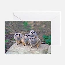 4 Meerkats Peering Greeting Cards (Pk of 10)