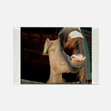 Humorous Equine Rectangle Magnet