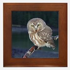 Saw-whet Owl Framed Tile