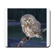 Saw-whet Owl Mousepad
