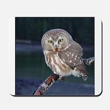 Saw-whet Owl Mousepad