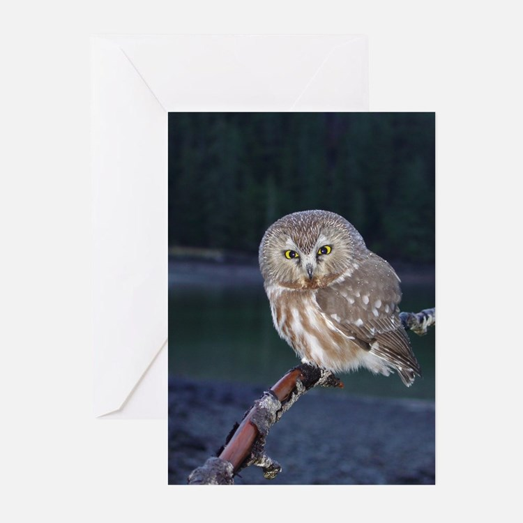 Saw-whet Owl Greeting Cards (Pk of 20)