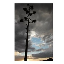Agave Stalk Postcards (pkg of 8)