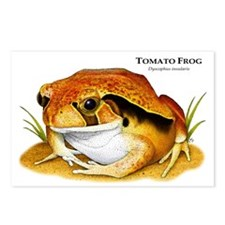 Tomato Frog Postcards (Package of 8)