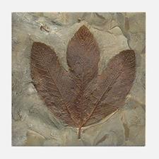 3 Leaf Fossil Art Tile Coaster