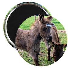 Baby Mini Donkey & Mom Magnet