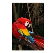 Preening Parrot Postcards (Package of 8)