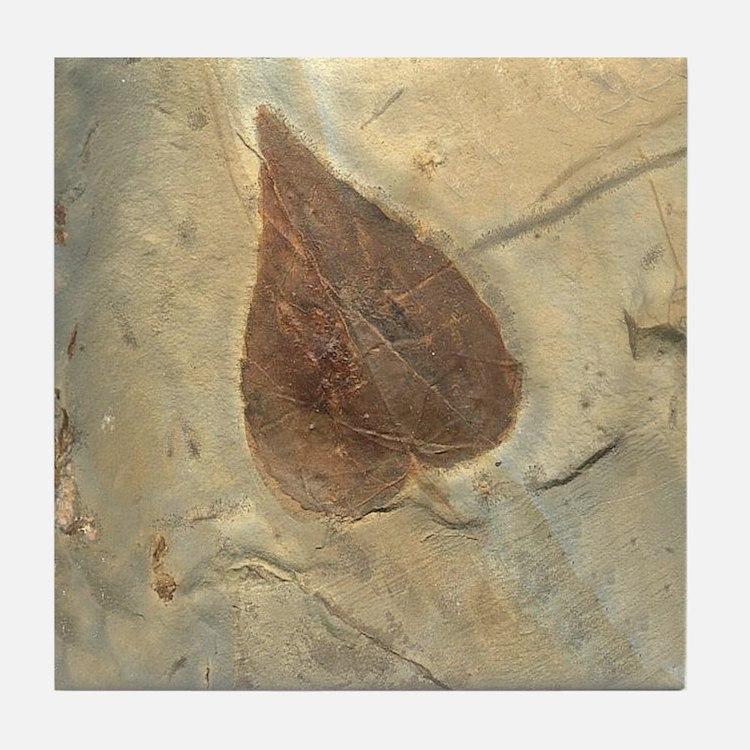 Leaf Fossil Art Tile Coaster