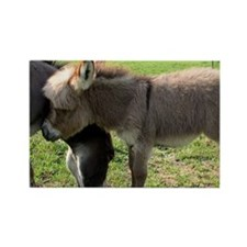 Baby Mini Donkey Hug Rectangle Magnet