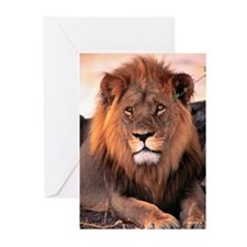 African Lion - Greeting Cards (Pk of 10)