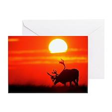 Caribou Sunset - Greeting Cards (Pk of 10)