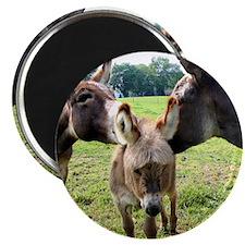 Miniature Donkey Family Magnet