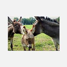 Miniature Donkey Family Rectangle Magnet