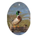 Mallard Flight Ornament (Oval)