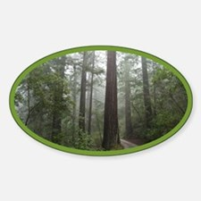 Redwood Forest Oval Sticker (10 pk)