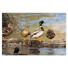 Mallard Ducks Posters