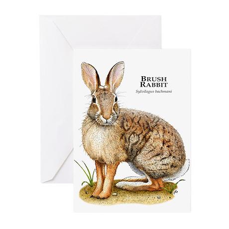 Brush Rabbit Greeting Cards (Pk of 10)