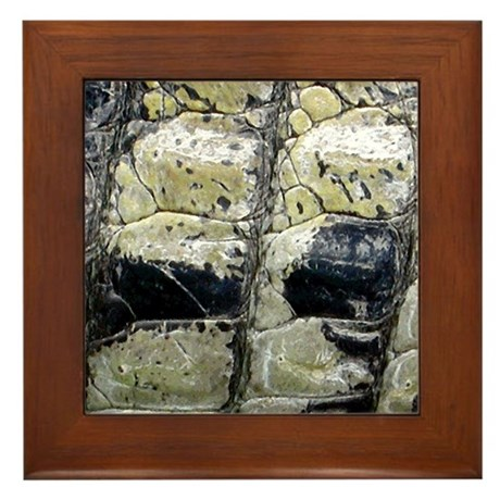American Crocodile Framed Tile By Wildeyeventures