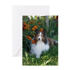 Sheltie in the Marigolds Greeting Card