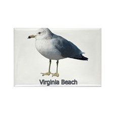 Virginia Beach Gull Rectangle Magnet