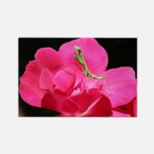 Rosy Mantis Rectangle Magnet