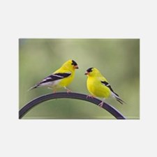 Goldfinches Rectangle Magnet