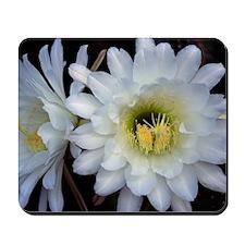 Cactus Flower 4353 Mousepad